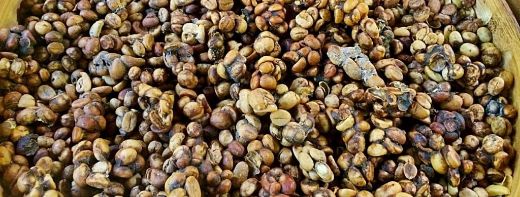 What is Kopi Luwak?