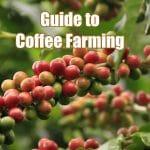 guide to coffee farming
