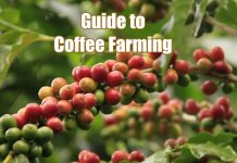 guide to coffee farming